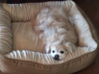 Midas loved to relax in his bed!