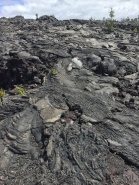 Pahoehoe as far as the eye could see at Hawai'i Volcanoes National Park.