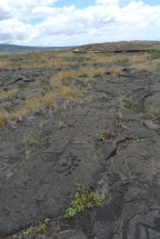 Pu'u Loa contains approximately 15,000 petroglyphs.