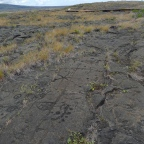 Pu'u Loa contains approximately 15,000 petroglyphs.