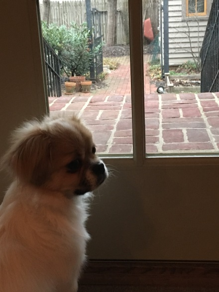 At the same time every day, Coco waits at the door for my dad to arrive home from work so she can be the first to greet him!