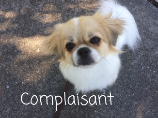 Coco is always complaisant when she knows she will be rewarded with a treat for good behavior.