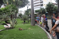 Parque de las Iguanas is a popular spot for both tourists and locals alike.